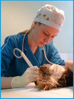 Ветеринарный врач широкого профиля, Стоматолог